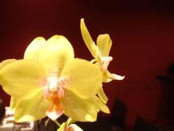 Gelb und gut