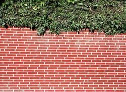 Auf der Mauer auf der Lauer sitzt ne kleine Pflanze