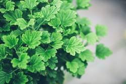 Grün Grün Grüner