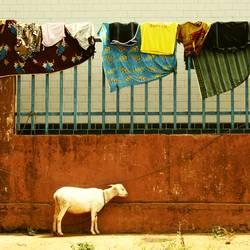 Guineé Laundry
