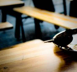 Berlin-Bird