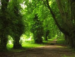 Grüne Allee in Irland