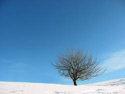 Winterbaum - winter tree