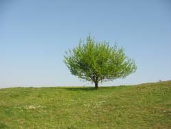 Sommerbaum - summer tree