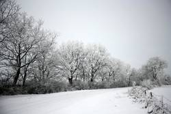 Schnees Stille