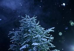 Schneewinter