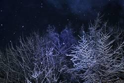 Winterweihnachtswunderwald