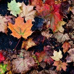 Dreckiger Herbst