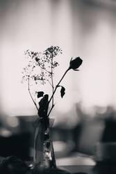 Rosen sind schwarz-weiß