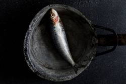 Poor sardine lunch