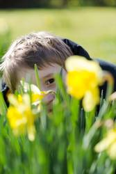 Young boy hides smiling behind yellow daffodil / narcissus.