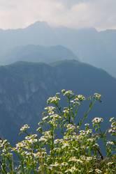 Vom Monte Brione