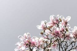 Magnolien aus Stahl