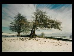 winterbäume_kraichgau_01