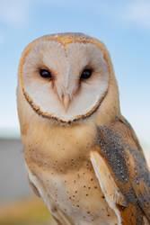 Portrait of white owl