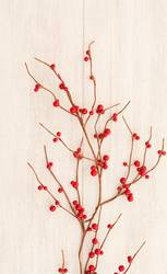 Christmas branch with red berries
