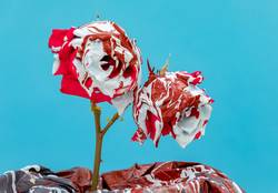 Stained red roses with paint
