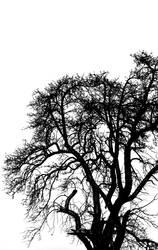 ::.. winter_tree ..::