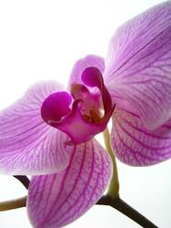 orchidäles bunt 3