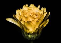 Blüte 03