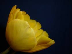 Portrait in gelb