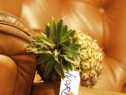 Ananas im Sessel