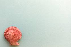 Shells isolated on a blue background