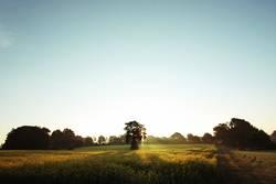 Schöner Morgen