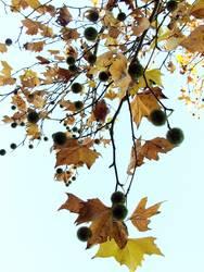 Herbstlocken