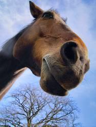das hauspferd
