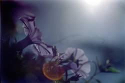nachtblumen