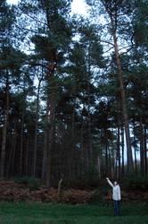 Knuffelchen allein im Wald #3