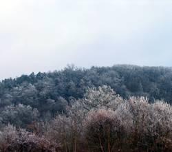 FrostWald