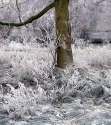 Frostschatten