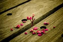 brokenflower