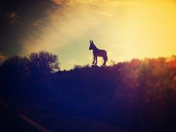 el burro de osborne