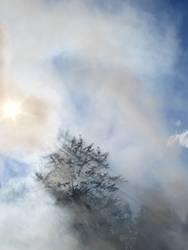 Rauch am Lagerfeuer steigt in die Luft