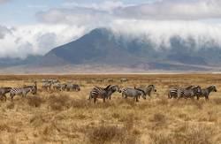 Ngorongoro Crater Safari Afrika