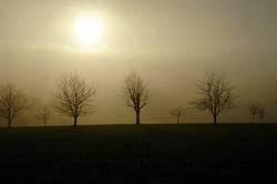 Januar-Sonne