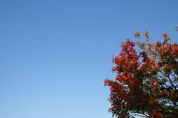 Herbstdings