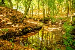 Wald an der Ostseeküste in Polen mit dem Flüsschen Orzechowa