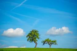 Bäume mit Wolken