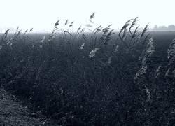 Binsen im Ochsenmoor, südlich des Dümmers