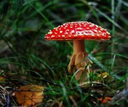 Ein Männlein steht im Walde ......