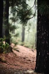 Teneriffa Corona Forestal III
