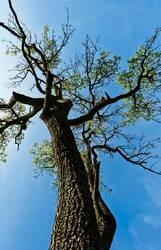 Aufbäumen
