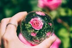 Rosa Rosen Blick durch eine Kristallkugel