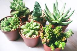 Six green exotic and rare succulent plants