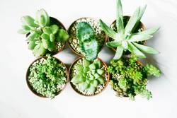 Six beautiful and green succulent plants