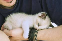Little kitty tired and lying down over a man's arm